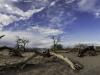 Mesquite dunes -1