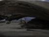 Mesquite dunes -2