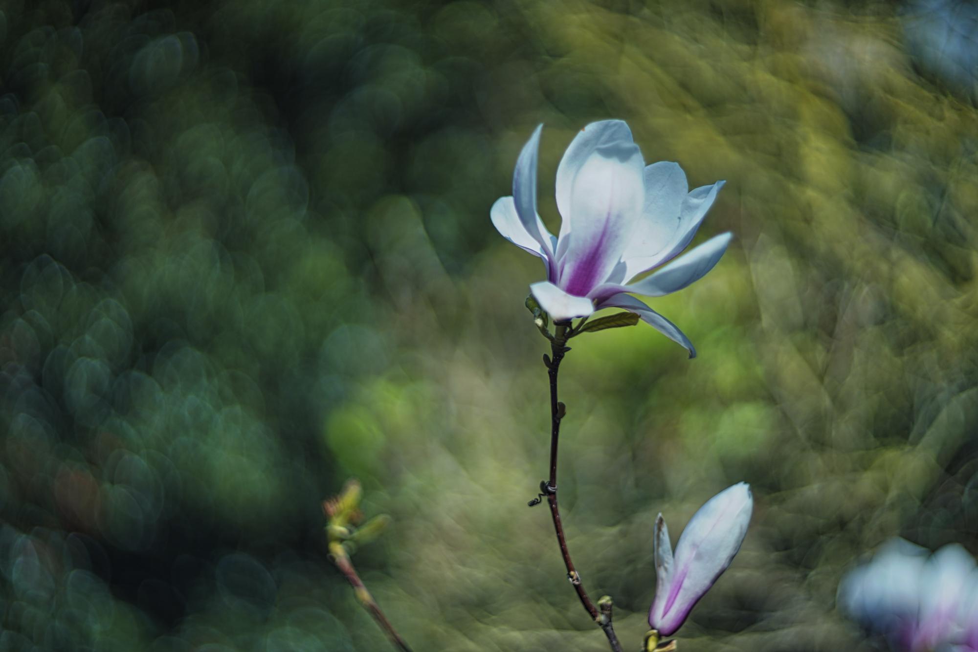 DSC02725©Uchujin-AdrianStorey-210320