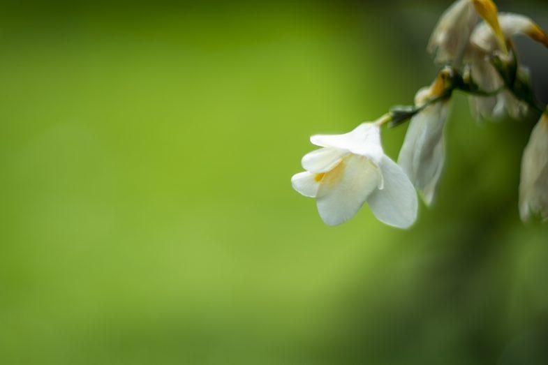 Helios 40 Flower - ©Uchujin/Adrian Storey 2019
